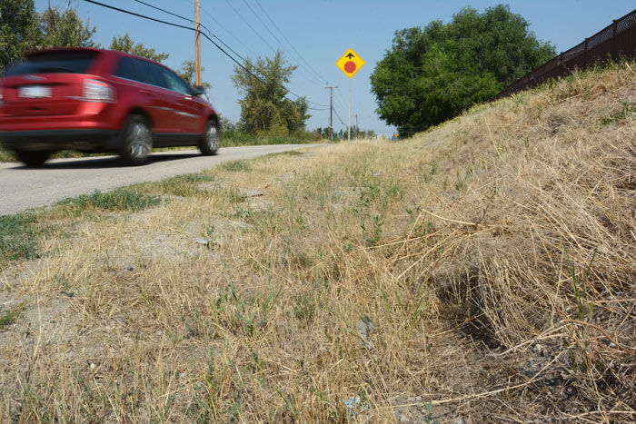Dry grass on Old Vernon Road