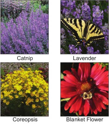 Thirft, Cushion Spurge, Catnip, Lavender, Missouri Evening Primrose, Tall Sedum, Coreopsis, Blanket Flower