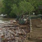 Flood 2017 - Flood and wind-battered trees