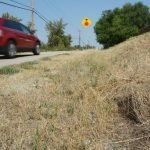 Drought 2015 - Dry Grass Kelowna
