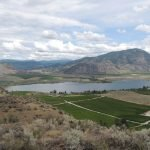 Drought 2015 - Osoyoos with irrigated grapes