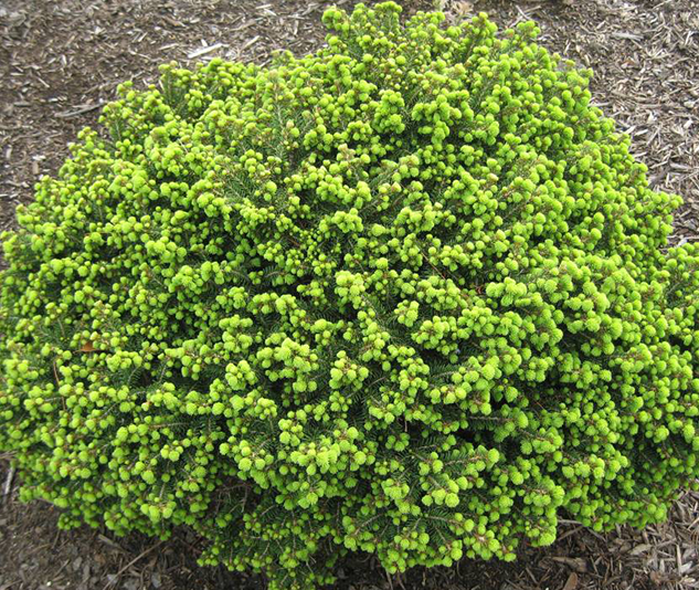 More information on this plant